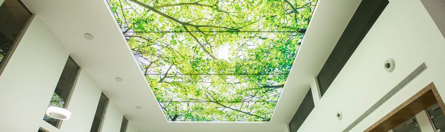 потолок деревья фотопечать потолок